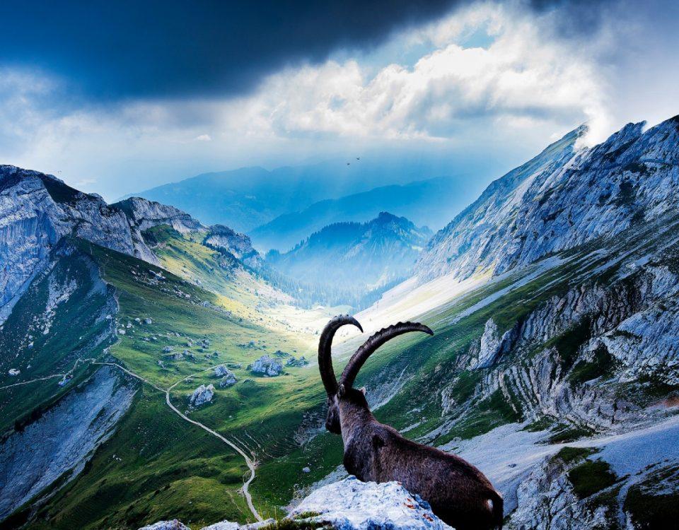Коза — очень емкий символ. Она воплощает в себе животворные силы